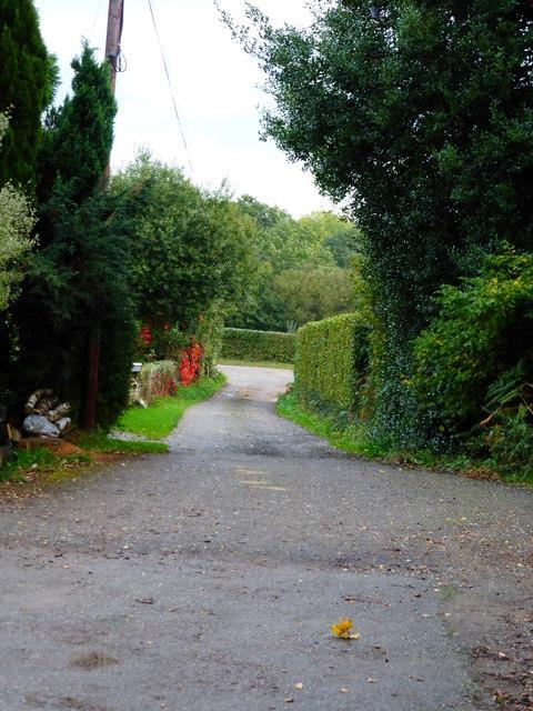 Bridleway to Selham Road