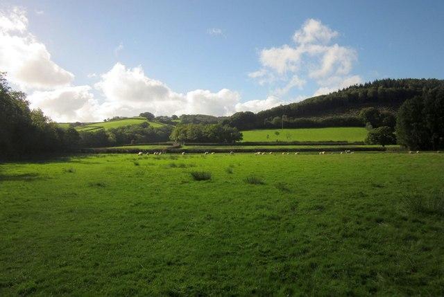 Sheep pasture, Halford