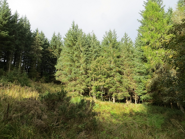 Woodland, Redside