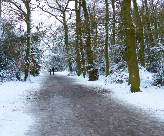 Path through the wood at Hunt's Hill