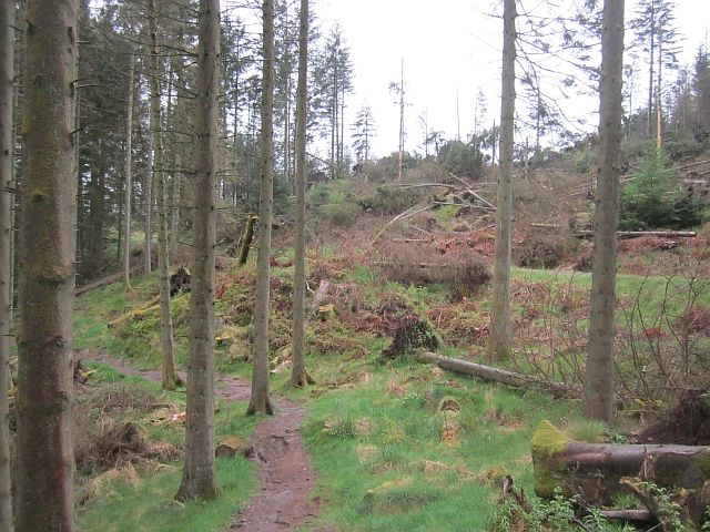 Windthrow, Mabie Forest