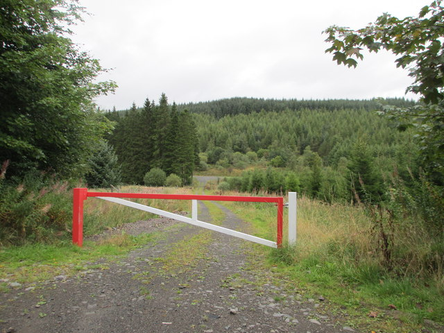 A red gate across a forestry track
