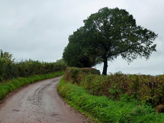 Oak on 226m spot height