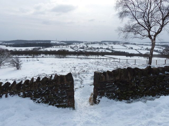 Snow scene at Beacon Hill Country Park