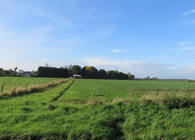 Small plantation, Moor End