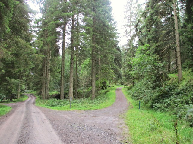 Cycle tracks in the Forest of Ae