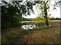 SJ7178 : Pond in stubble field by Maggie Cox