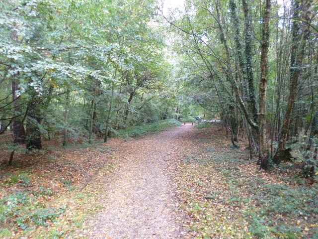 Ringwood Forest, footpath