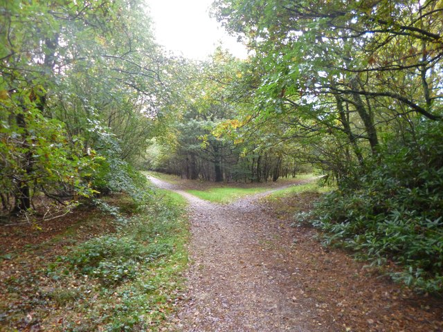 Ringwood Forest, path junction