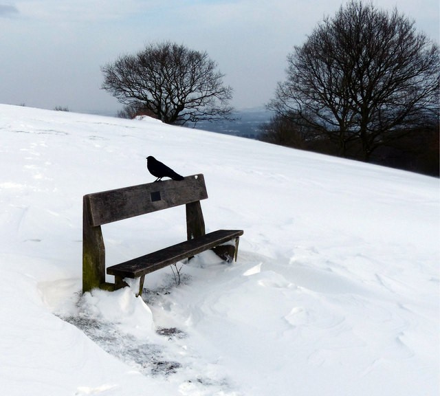 A crow on a bench