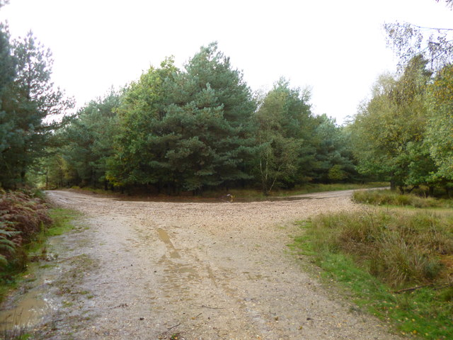Ringwood Forest, forestry road junction