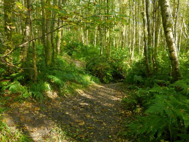 Path in Duchess Wood