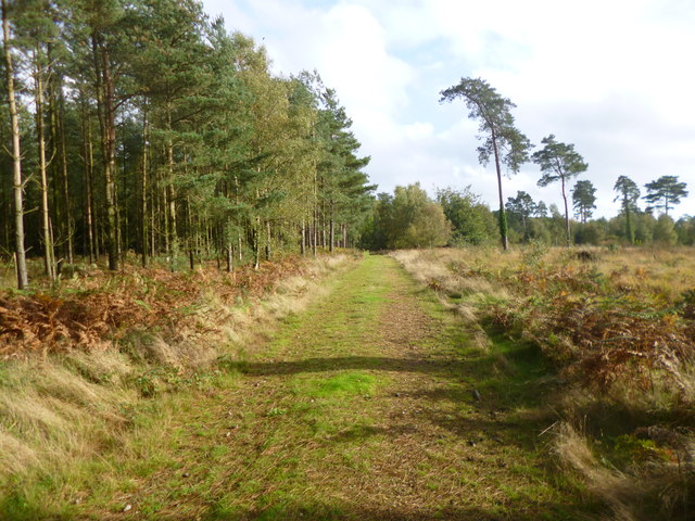 Ringwood Forest, forestry road