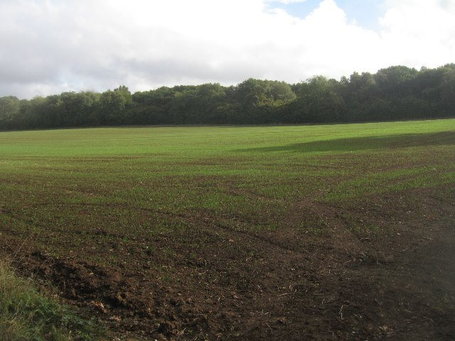 Emerging winter crop & Pardown Copse