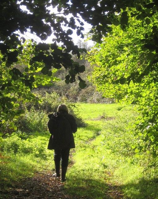 Path on Rora Down