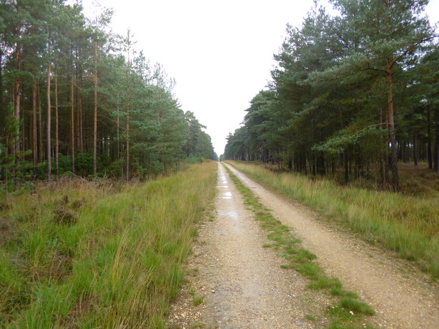 Somerley, forestry road