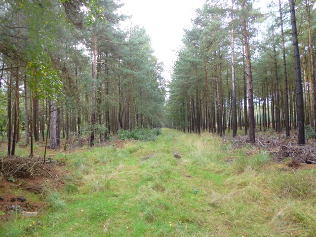 Somerley, forestry track