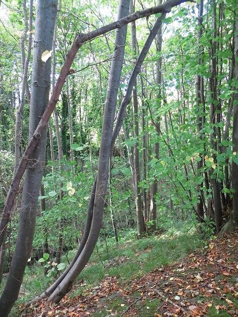 Woodland, Dalhousie