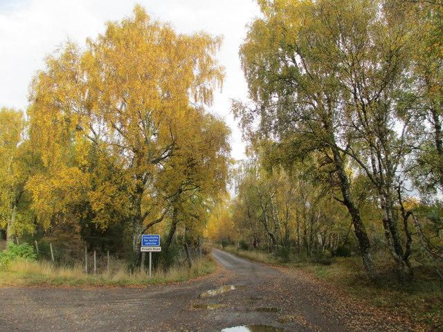 Private road to Tulloch