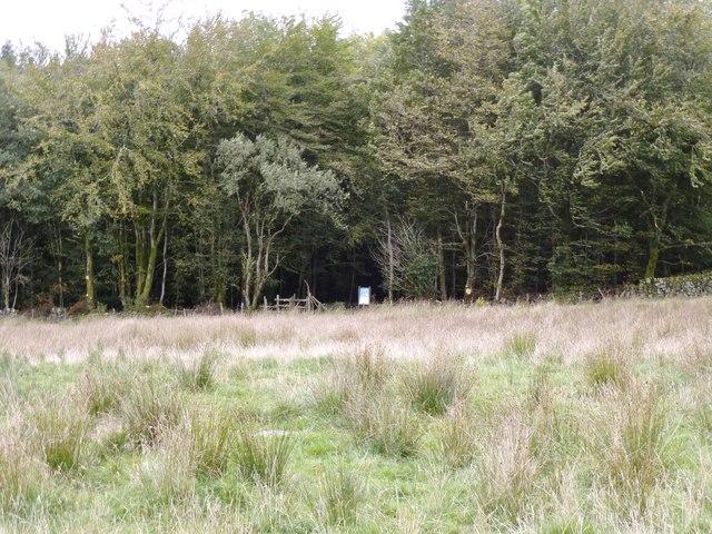 Eastern flank of Balloch Wood