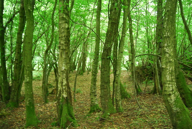 In Long Wood