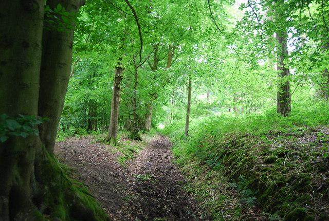 Footpath in Long Wood