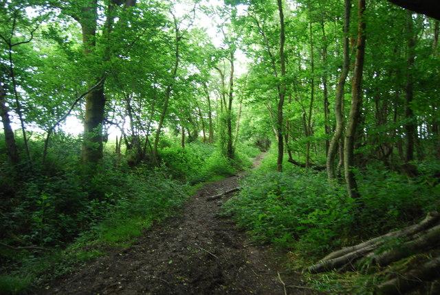 Footpath, Long Wood