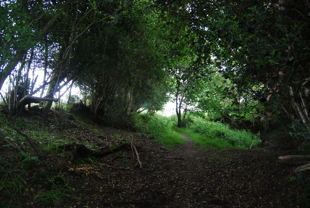 Footpath in Long Wood