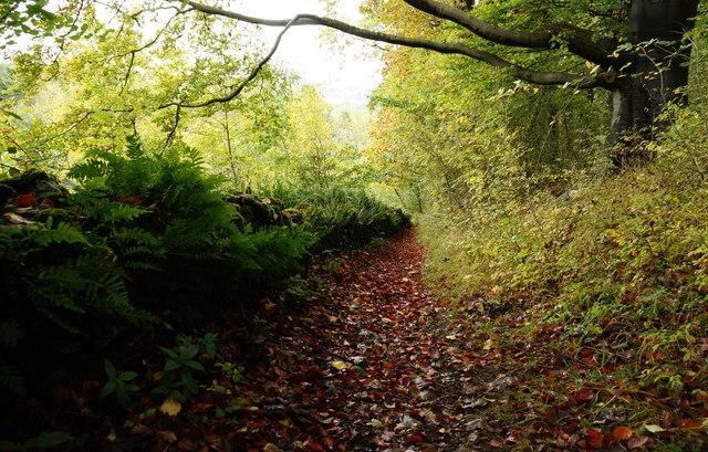 Autumn colour in Cracknowl Wood