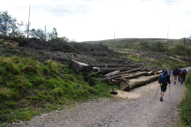 Logging debris on the edge of Macclesfield Forest
