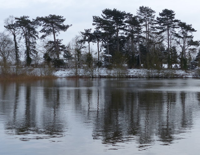 Trees at Cropston Reservoir