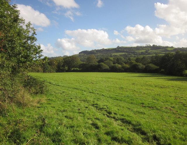Pasture near Halford Cross
