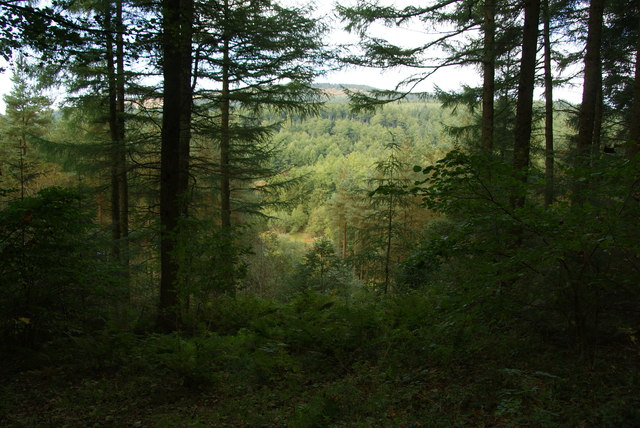 Macclesfield Forest near Trentabank Reservoir