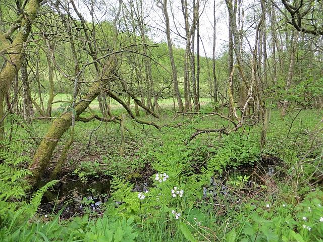 Wetland, Moss Road