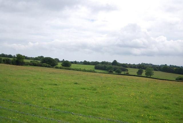 Meadow, High Weald
