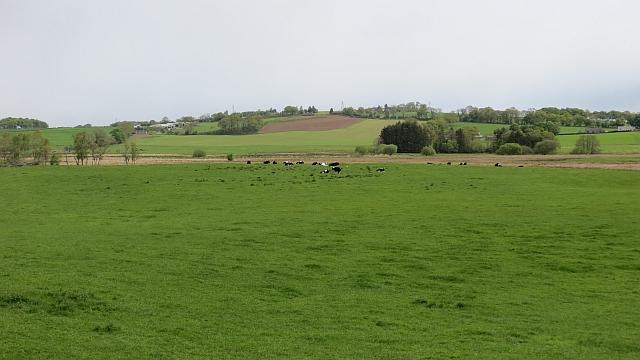 Grassland by Crooks Pow