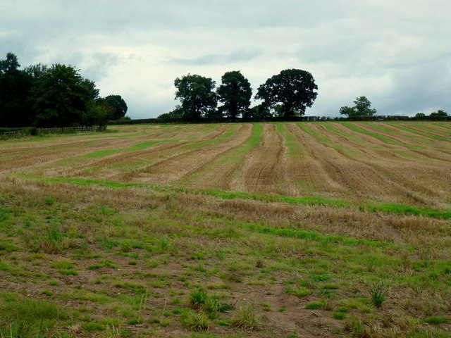 Striped stubble field