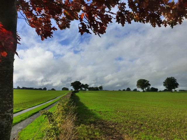 Looking towards Gwern-eiddig Farm, near Raglan