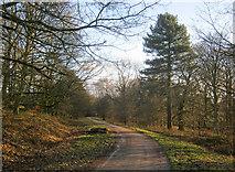 SK2769 : Track near Swiss Cottage by Trevor Rickard