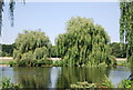 TQ4871 : Weeping Willows, River Cray by N Chadwick