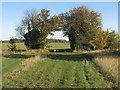 TL3150 : Half way between Croydon and Arrington by John Sutton