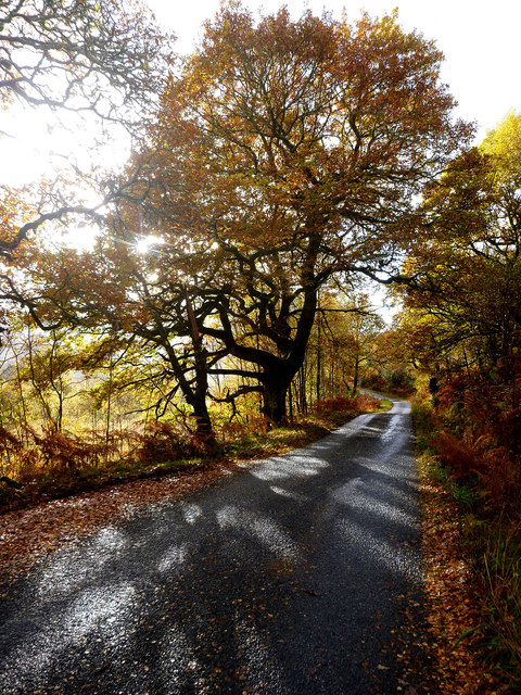 Sunshine through autumn oak, Glen Roy