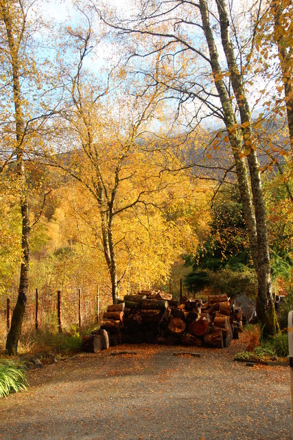 Autumn logs for winter fires