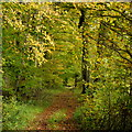 SU2952 : Coldridge Ride, 2 by Jonathan Billinger