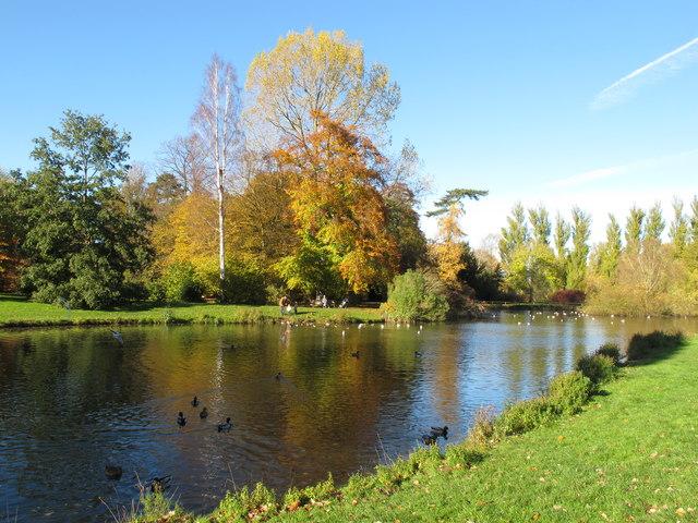 Autumn leaves, duck pond, University Parks, Oxford