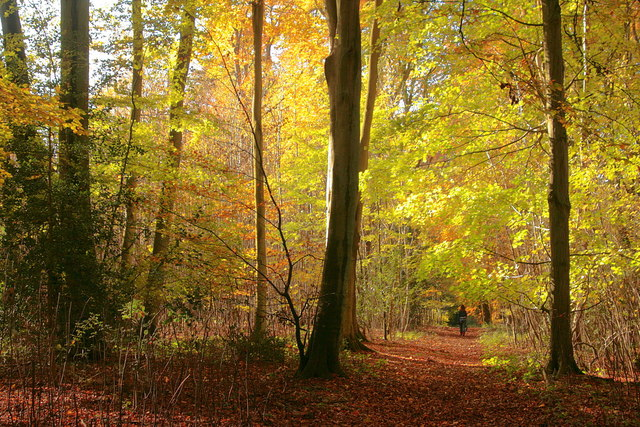 Autumn in Little Park Copse