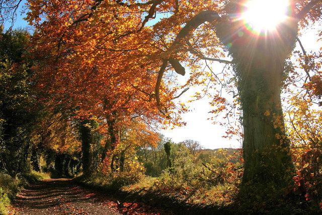 Autumnal colours near the ruined New Farm