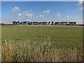 TL6370 : Field by B1102 by Hugh Venables