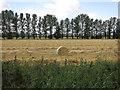 TL6577 : Straw bale by Hugh Venables