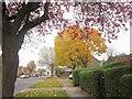 ST5767 : Bishport Avenue, Bristol by Derek Harper